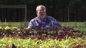 ornamental sweet potato southern gardening tv august 29 2012