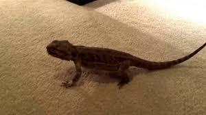 Lizard Meme - dank meme compilation lizard youtube