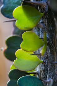 madagascar native plants 300 best madagascar images on pinterest madagascar beautiful