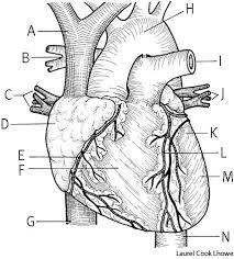 hearts define hearts at dictionary com