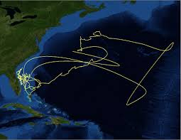 Google Map Miami by Electronic Tagging And Tracking Marine Animals Supports