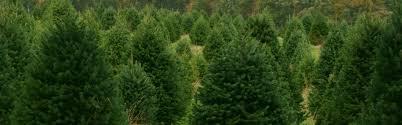 home mr christmastree