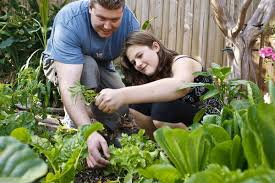 the home gardening hamper u2013 5 essentials for the first time farmer