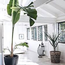 chambre des metiers 56 plante d interieur pour cfe chambre des metiers élégant les 56