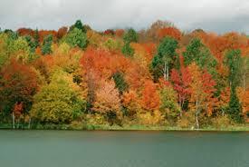 leaves change colour autumn bloom u0027n nursery