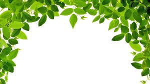 green leaves wallpaper green leaves images for desktop 35