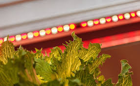types of grow lights the different types of grow lights available