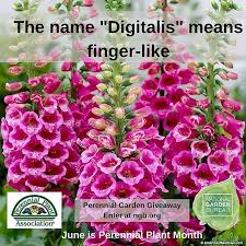 105 best perennials images on pinterest flower gardening