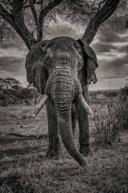 african safari animals african safari animals 34 photos that will make you want to visit