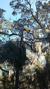morris tree service landscape company port richey florida