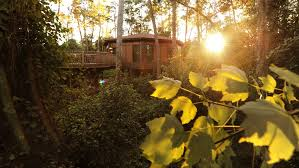 Treehouse Villas At Disney World - micki stuart acc resorts at walt disney world