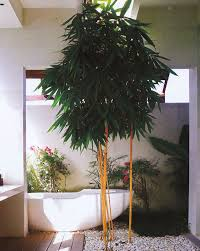 indoor garden design modern design by moderndesign org