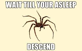 Funny Spiders Memes Of 2017 - 23 funny spider memes weneedfun