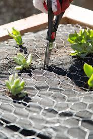 vertical succulent garden tutorial the home depot