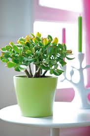 The Best Indoor Plants 8 Best Plantes Grasses Images On Pinterest Succulents Flowers