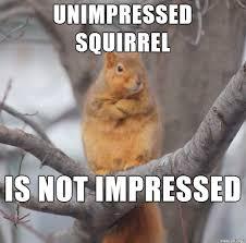 Squirrel Meme - funny squirrel pics google search squirrels pinterest