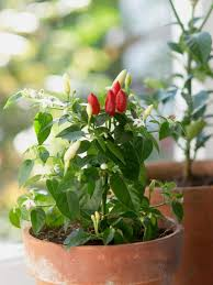 home veggie garden ideas 15 great balcony vegetable garden ideas small room ideas