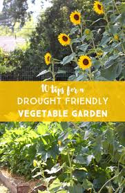 how to grow a vegetable garden in texas home outdoor decoration
