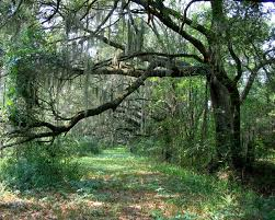 Mill creek forest hunting land plantation services specializes