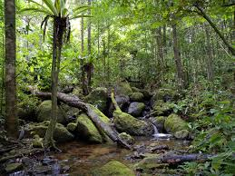 Under Canopy Rainforest by Madagascar Lowland Forests Wikipedia