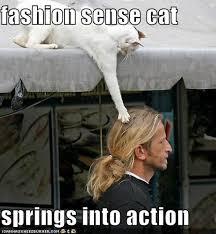 Fashion Meme - fashion sense cat funny meme