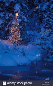 Hollywild Zoo Christmas Lights by Christmas Lights In Sc Christmas Lights Decoration