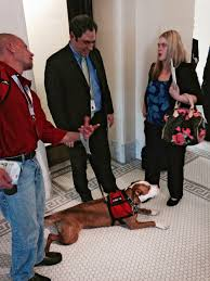 american pitbull terrier a legacy in gameness bill to stop bans of pit bulls claws way to victory the salt