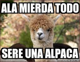 Alpaca Meme Generator - alpaca meme generator 28 images alpaca meme 28 images alpaca