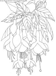 flower coloring pages fuchsia water lily coloring pages