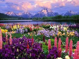 beautiful flower wallpapers sizzling magazine