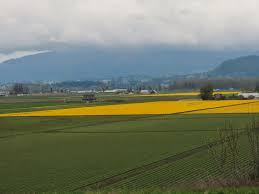 Skagit Valley Tulip Festival Bloom Map S V Wand U0027rin Star Skagit Valley Tulip Festival Tour