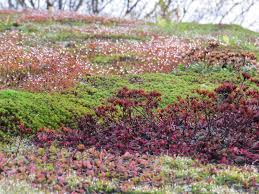 how to build a green roof home exterior design idea for excerpt