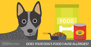 processed cooked foods causing allergies in dogs