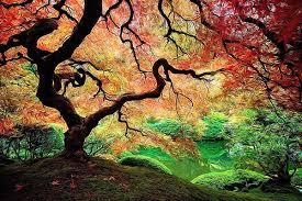 this is what trees look like on acid rebrn