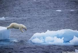 history of polar bears endangered polar bear