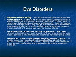 Is Night Blindness Hereditary Genetic Disorders Lhasa Apso
