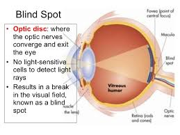 Blind Spot Left Eye Human Eye