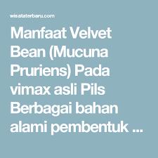 manfaat velvet bean mucuna pruriens pada vimax asli pils