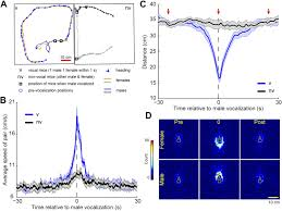female mice ultrasonically interact with males during courtship