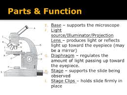 compound light microscope parts and functions compound light microscope ppt video online download