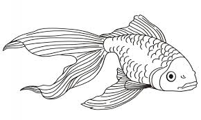 goldfish coloring pages goldfish coloring pages print free