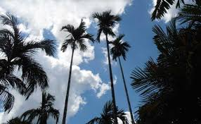 all about palm trees a photographic and botanical appreciation
