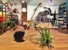 flower delivery rochester ny rochester ny florist s day gift ideas air plant globe