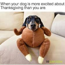 Orange Dog Meme - funny meme about dog vs thanksgiving day 99gap com