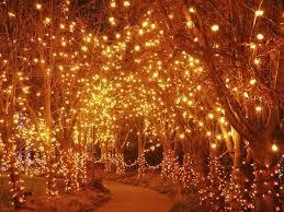 best 25 light tree ideas on lights on