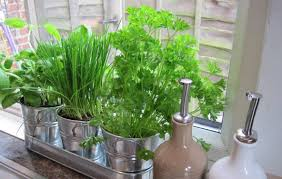 stainless steel pots indoor herb garden the advantages of indoor