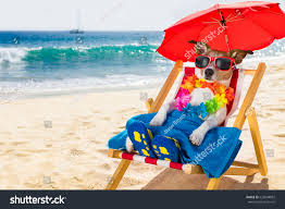 Clip On Umbrellas For Beach Chairs Jack Russel Dog Resting Relaxing On Stock Photo 633648062