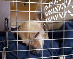 crate training how to train your human for dogs crates jail cell or cozy home