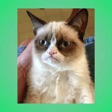 Tardar Sauce Meme - create meme tardar sauce grumpy cat meme grumpy cat