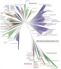 the microbiome the kavli foundation